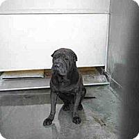 Adopt A Pet :: Benson - Mira Loma, CA