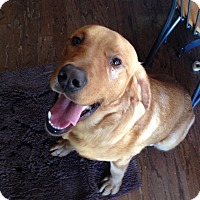 Adopt A Pet :: Finnigan - Homewood, AL