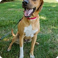 Adopt A Pet :: Cooper - Hillsboro, IL