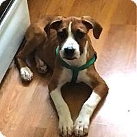 Adopt A Pet :: Bando - Mount Laurel, NJ