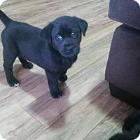 Adopt A Pet :: Judy - Saskatoon, SK