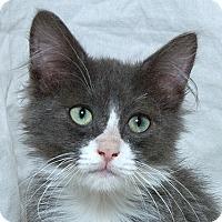 Adopt A Pet :: Fletcher M - Sacramento, CA