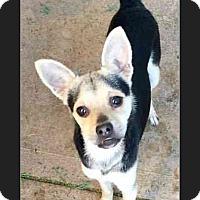 Adopt A Pet :: Jeffrey - Phoenix, AZ