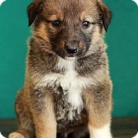 Adopt A Pet :: Prada - Waldorf, MD