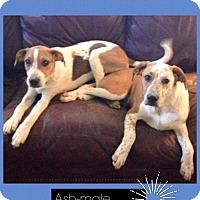 Adopt A Pet :: Ash and Naiya (Christy) - Washington, DC