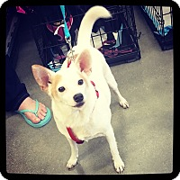 Jack Russell Terrier Mix Dog for adoption in Grand Bay, Alabama - Biff