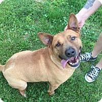 Adopt A Pet :: Harris - Columbia, MD