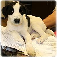 Adopt A Pet :: Regal - Aurora, CO