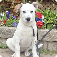 Adopt A Pet :: Quenna - West Chicago, IL