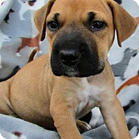 Adopt A Pet :: Casino Pup - Mirage - Adopted! - San Diego, CA