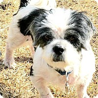 Adopt A Pet :: Max-ADOPTION PENDING - Boulder, CO