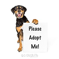 Adopt A Pet :: Derby - Scottsdale, AZ