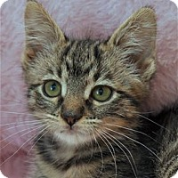 Adopt A Pet :: Jane - Lincoln, CA
