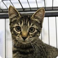 Adopt A Pet :: Sneetch - Sarasota, FL