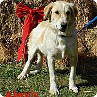 Adopt A Pet :: Alexis - Lawrenceburg, TN