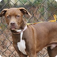 Adopt A Pet :: RHETT BUTLER - Media, PA