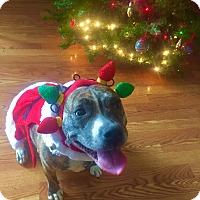 Adopt A Pet :: Maggie - Trenton, NJ
