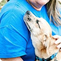 Adopt A Pet :: Annie - Chattanooga, TN