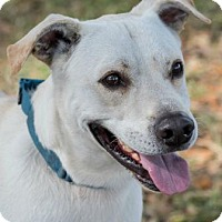 Adopt A Pet :: Matty - Loxahatchee, FL