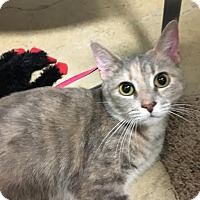 Adopt A Pet :: Emma - Lancaster, PA