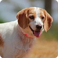 Adopt A Pet :: Molly B - Lee's Summit, MO