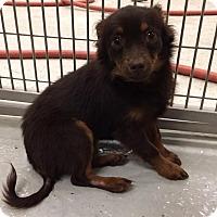 Adopt A Pet :: Tosha - Humble, TX