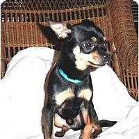 Adopt A Pet :: Mack - Mooy, AL