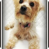 Adopt A Pet :: Olivia - Pascagoula, MS