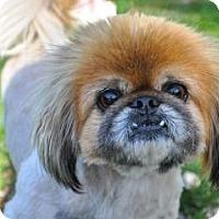 Adopt A Pet :: Charlie & JJ - Chantilly, VA