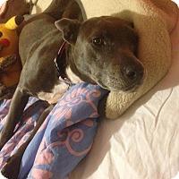 Adopt A Pet :: Jade - Houston, TX