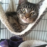 Adopt A Pet :: OZZY - Huntington Station, NY