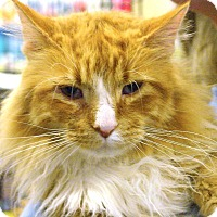 Adopt A Pet :: Garfield - Pittstown, NJ
