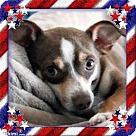 Adopt A Pet :: Lil Bobbi