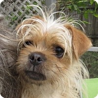 Adopt A Pet :: Obi-1 Cannoli - St Petersburg, FL