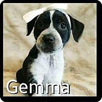 Adopt A Pet :: Gemma - Rancho Cucamonga, CA