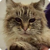 Adopt A Pet :: Lacey - Niagara Falls, NY