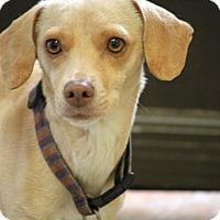 Adopt A Pet :: Genesis - Cranston, RI