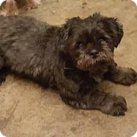Adopt A Pet :: Gibbs - Conway, AR