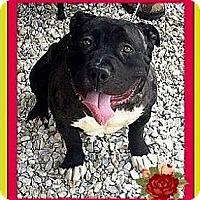 Adopt A Pet :: Petunia - Murrieta, CA