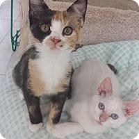 Adopt A Pet :: Elsa & Ali - Myrtle Beach, SC