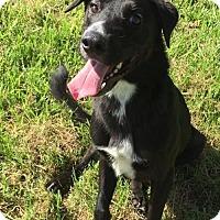 Adopt A Pet :: Bigsby - Lake Jackson, TX