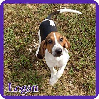 Treeing Walker Coonhound/Treeing Walker Coonhound Mix Puppy for adoption in Jasper, Indiana - Logan