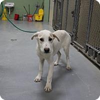 Adopt A Pet :: A21 NAORA - Odessa, TX