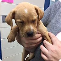 Adopt A Pet :: Bobbi - Barnegat, NJ