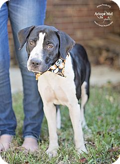 Hound (Unknown Type) Mix Dog for adoption in Kingwood, Texas - Cookie