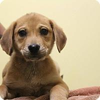 Adopt A Pet :: Mercury - Waldorf, MD