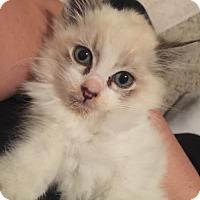 Adopt A Pet :: REGGIE - Lakewood, CA