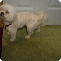 Adopt A Pet :: Zoey  -Adopted! - Kannapolis, NC