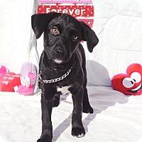 Adopt A Pet :: Wyanita - West Chicago, IL