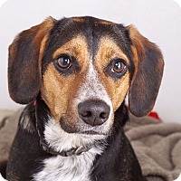 Adopt A Pet :: Wilbur - Sudbury, MA